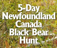 5-day newfoundland canada black bear hunt