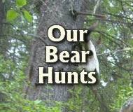 our bear hunts